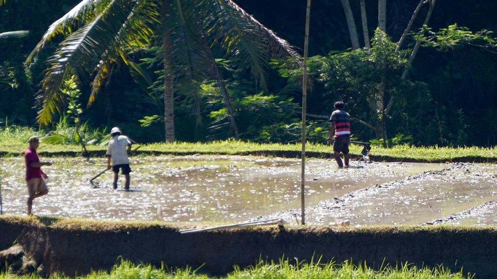 RiceWorkers